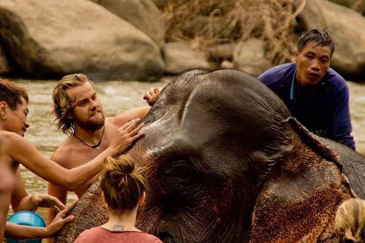 Thaïland at Chiang Mai Break The Mold Indian Elephant Elephant Mammal Adult River Friendship Safari Animals Washing People Women Fun Travel Animal Wildlife Happiness Embracing Only Women Forest Togetherness Adults Only Young Adult EyeEm Gallery Eye4photography  EyeEm Best Shots Travel Destinations