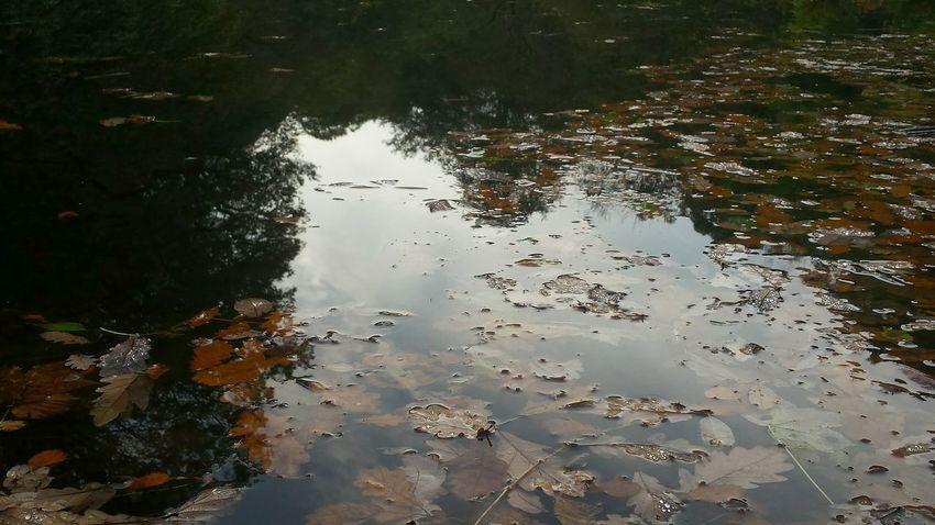 Reflection Water Standing Water Puddle Nature No People Outdoors Lake Day Tree Riverside Photography Multi Colored Autumn Colors Underwater Beauty In Nature Reflection Lush - Description Scenics Lush Foliage Change Fragility National Trust WoodLand Autumn Hills And Valleys