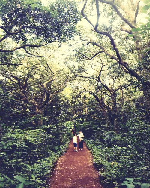 mother and son Jejuisland Trip Photos Summer Korea Forest Path Walking In The Woods Deviation