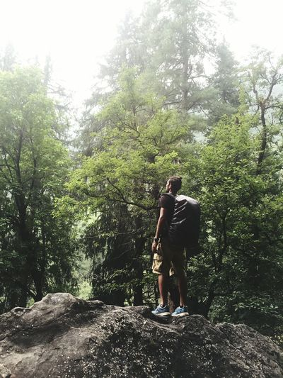 Hiker Standing On Rock Against Trees At Forest