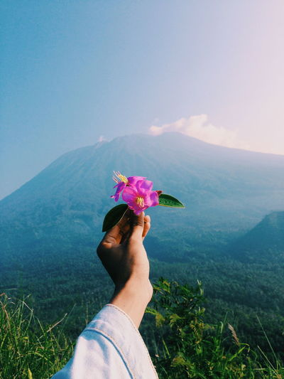 Cropped hand of woman holding pink flower against mountains
