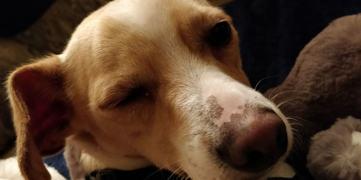 EyeEm Selects Dog Pets One Animal Mammal Animal Themes Animal Domestic Animals