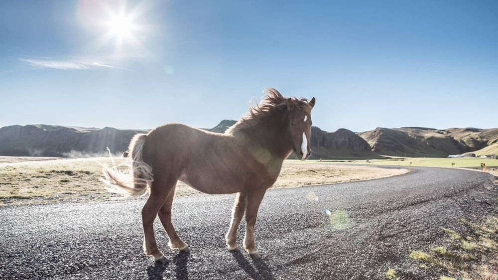 Horse Domestic Animals Sunlight Animal Themes One Animal Icland nature Day Sun Nature Outdoors Landscape Clear Sky No People Sky Mountain Range Beauty In Nature EyeEmNewHere The Week On EyeEm