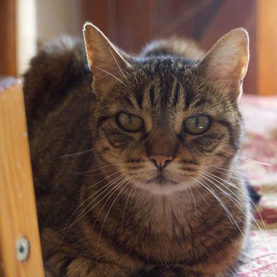 Perle bientôt 18 ans Domestic Animals Whisker
