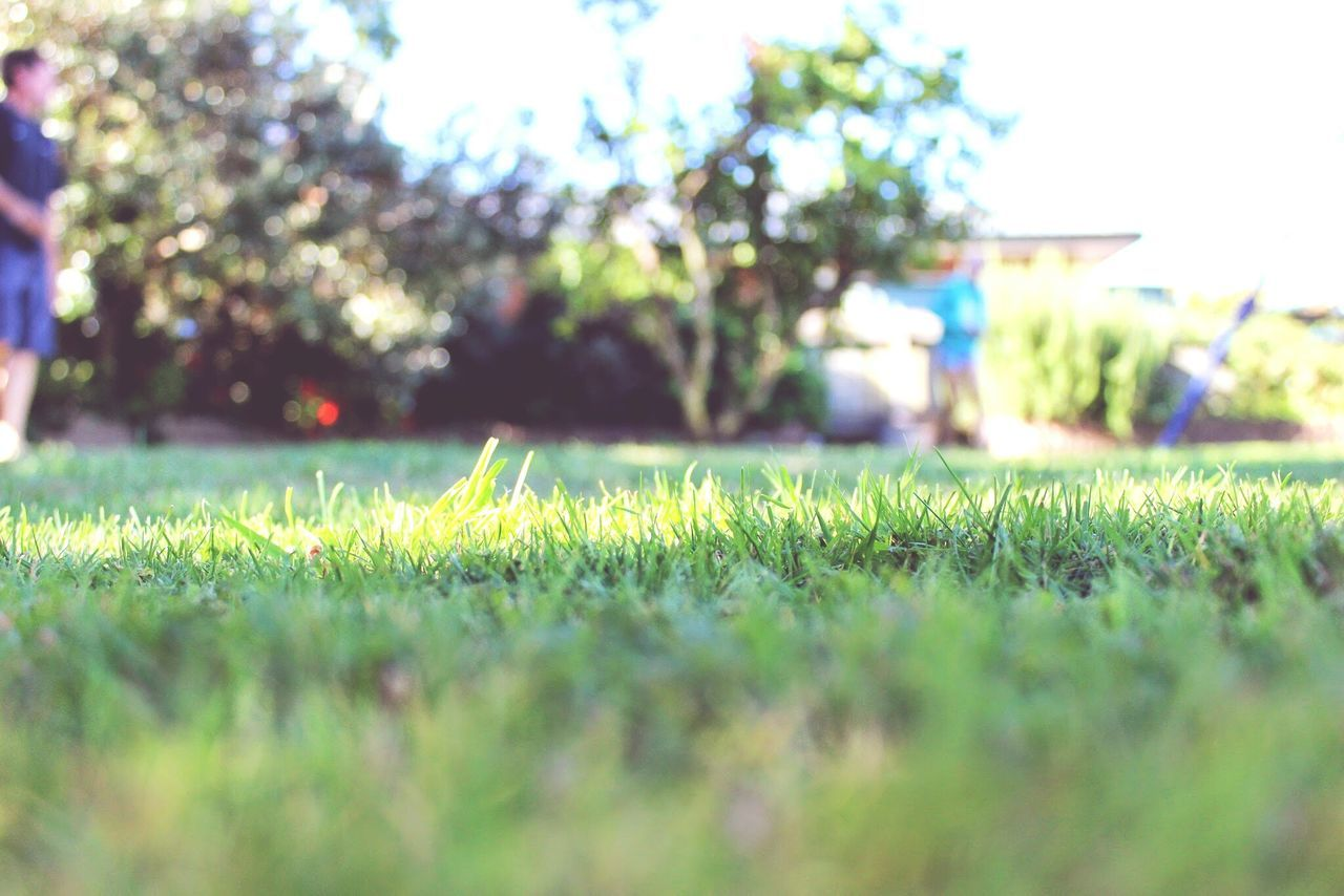 CLOSE-UP OF GRASS IN PARK