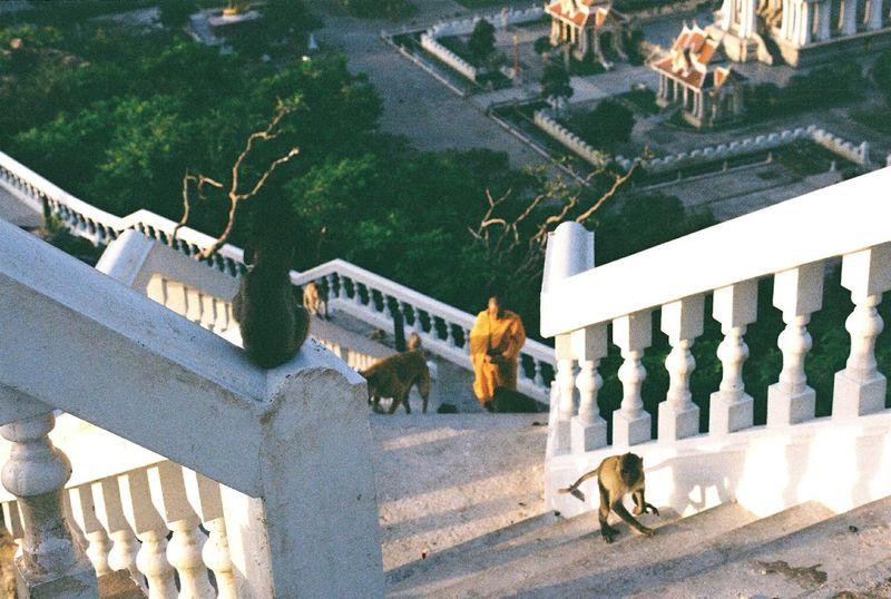 Monk and his monkey Thailand Film Filmphotography Filmcamera Filmisnotdead Analog Films Adayinthailand Filmcommunity Nikonf2n Kodakfilm Prachuabkirikhan Temple Monkey Life