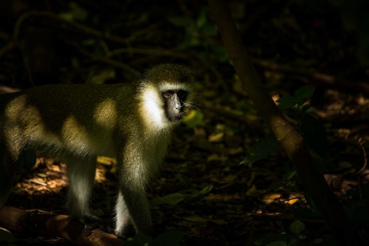 Portrait of monkey standing on land in forest