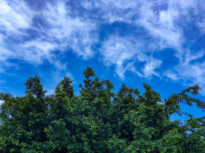 Nature- sky and