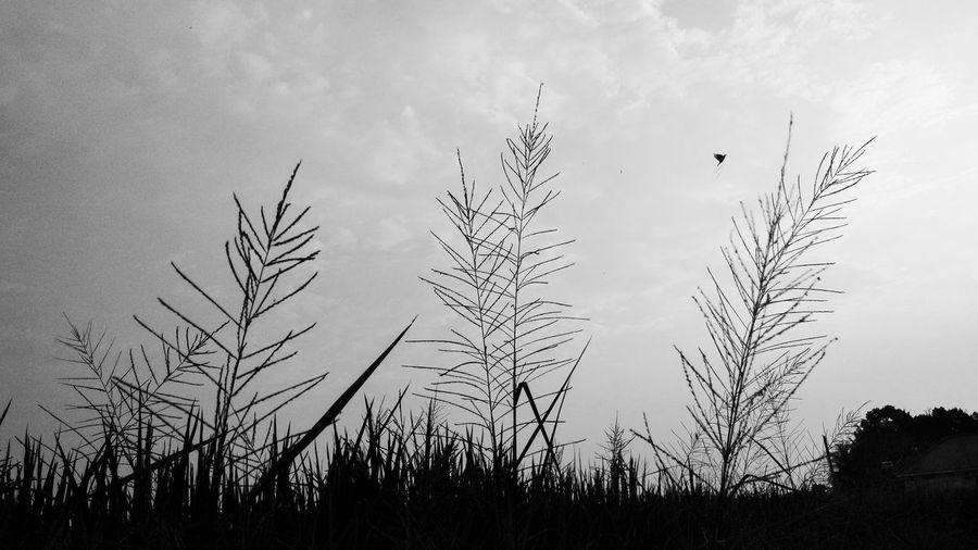 Bird Tree Bird
