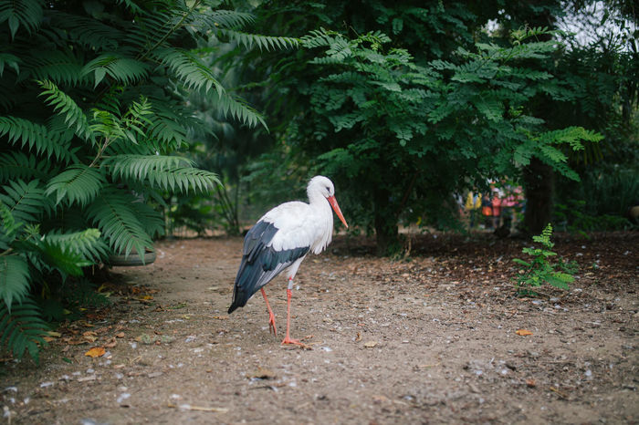 Bird Photography Birds Of EyeEm  Ciconiidae Ciconiiformes Stork Family Animal Animal Themes Animal Wildlife Animals In The Wild Bird Birds Birds_collection Nature Outdoors Plant Refuge Stork Storks Vertebrate The Week On EyeEm Editor's Picks