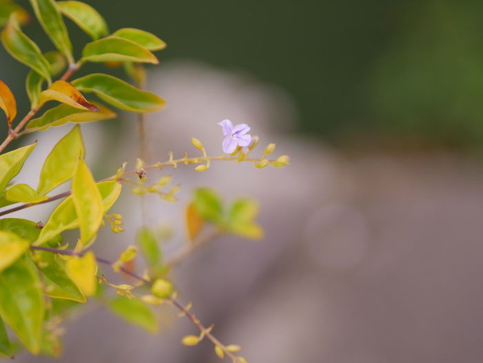 Nature view Plant Growth Flower Vulnerability  Beauty In Nature Flowering Plant Fragility Freshness Selective Focus Nature Close-up Day Petal No People Leaf Plant Part Outdoors Inflorescence Flower Head Green Color Small