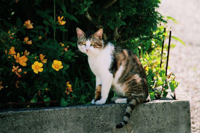 睨まれた。 Canon Eos70d SIGNA Lens 18_300mm Photo Cat ねこ おとなりさん