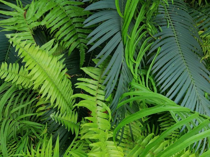 Beautiful green leaves Nature Nutural Background Texture Green Leaf Forest Wild Backgrounds Leaf Fern Full Frame Close-up Plant Green Color Lush Foliage Plant Life Natural Pattern Palm Leaf Leaf Vein