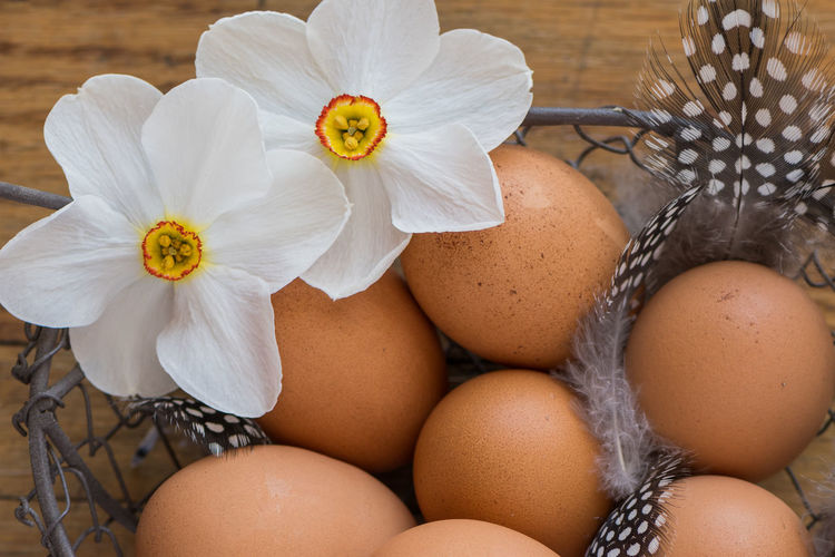 Close up of chicken eggs in a basket with feathers and flowers Feathers Freshness Poet's Daffodil Brown Chicken Egg Close-up Egg Flower No People Still Life