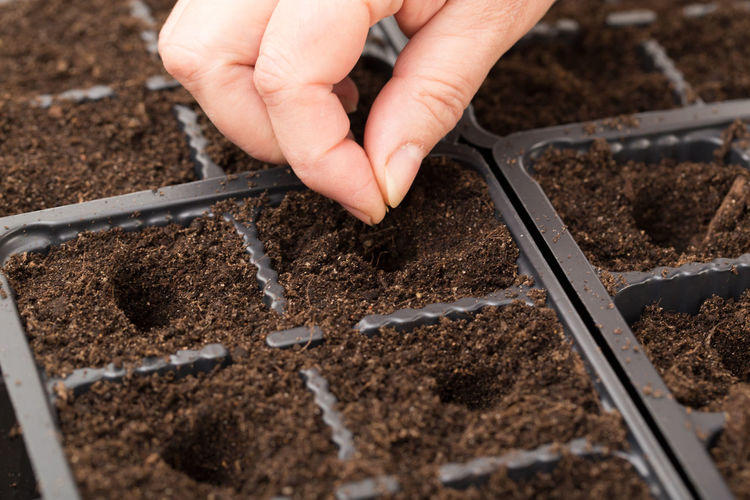 Close-up of hand sowing seeds in seedling tray