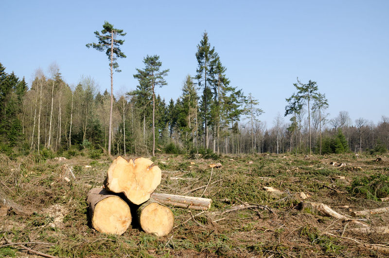 In the forest Forest Nature Landscape Lumber Industry Timber Wood Trees Copy Space Tree Trunk Tree Trunks Felled Tree Tree Plant Land Field Sky Non-urban Scene No People Log Deforestation Tranquility Environment Wood - Material Day Tranquil Scene Firewood Outdoors
