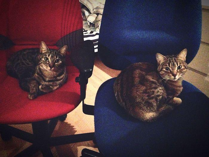 MUM & BABYCAT Cat Baby