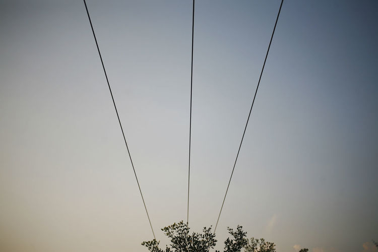 Sky Cable Low Angle View No People Nature Plant Electricity  Tree Connection Clear Sky Power Line  Copy Space Day Fuel And Power Generation Outdoors Power Supply Tranquility Vignette Technology Growth Environment Environmental Issues Personal Perspective Simplicity Copy Space My Best Photo