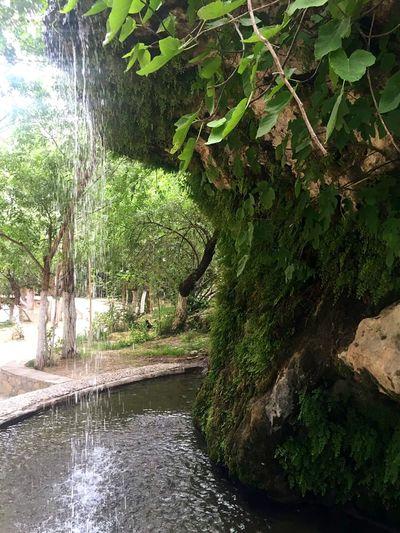 Somuncubaba Damlacıklar Sizinti Trip Photo Advanture Yeşil / Green ♧ Dogal Doğa Moss Mossy Stone Yosunlar Green Nature Yeşil Doğa