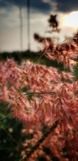 Wildgrass Pink Growth Nature Red Outdoors Plant No People Sky Beauty In Nature Flower Tree Day Close-up Freshness SamsunggalaxyS8+ Samsungphotography