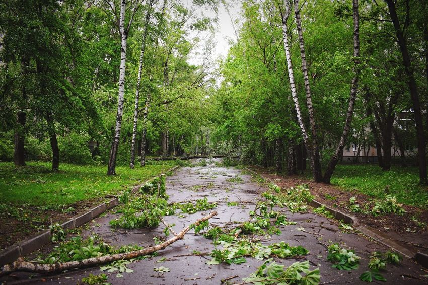 Hurricane today on my way home Tree Nature Growth Tranquility Forest Green Color Tranquil Scene No People Outdoors The Way Forward Scenics Beauty In Nature Transportation Day Tree Trunk Grass Freshness Fallen Trees Hurricane Damage How's The Weather Today?