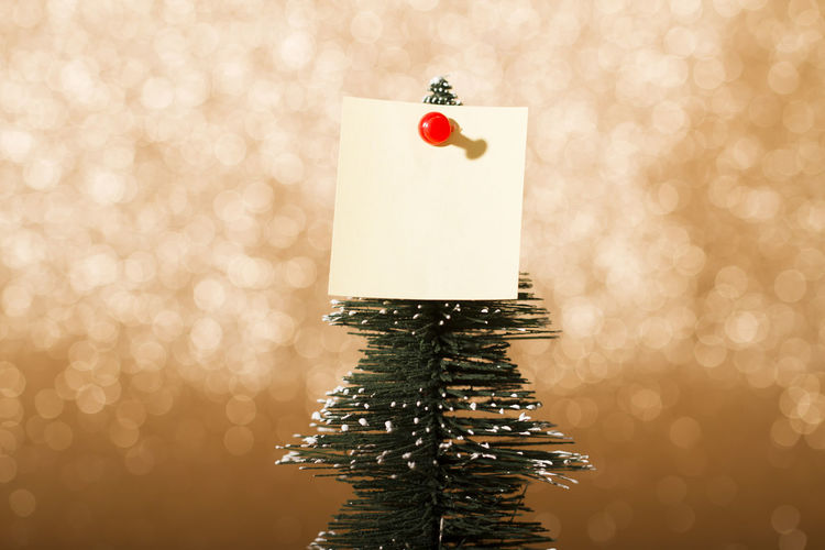 Close-up of blank note on christmas tree