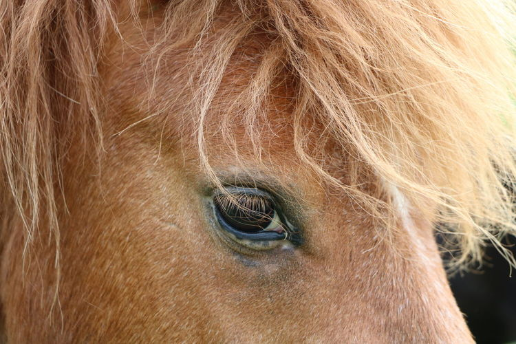 Animal Animal Head  Animal Themes Brown Brown Eyes Browny Eye EyeEm Nature Lover Horse Looking At Camera Nature No People Pets