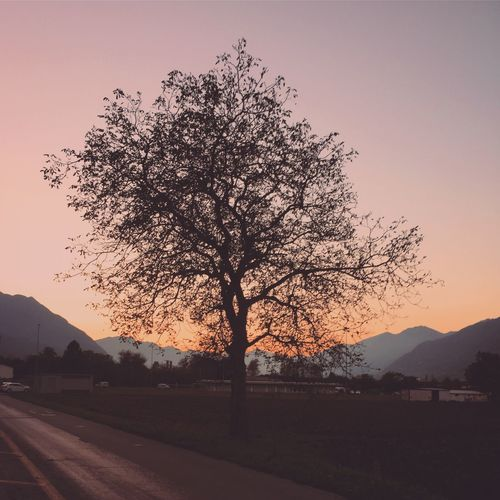 Good evening Tree Nature Sunset Beauty In Nature Tranquil Scene Sky Scenics Mountain The Great Outdoors - 2017 EyeEm Awards