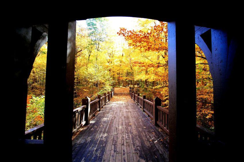 Autumn Collection Autumn🍁🍁🍁 Grant Park Fall Colors
