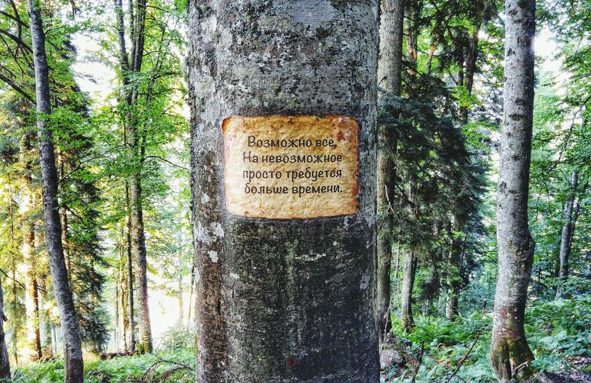 Trees Signs Nature Forest Mountains Красная поляна Россия 🌞😘 Writings