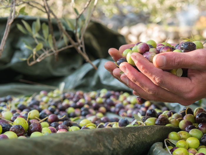 Cropped hands holding olives