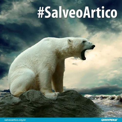 Salveoartico Urso Ursopolar Polar  artico greenpeace