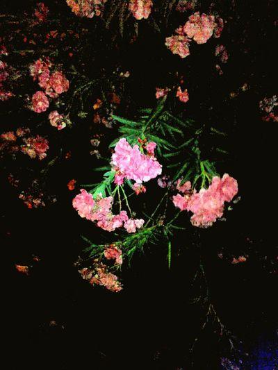 Florecitas Flores Y Más Flores