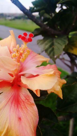 Flores Flores Y Más Flores Floresconmagia Flores, Bosques Y Naturaleza. Flores Y Texturas Parque El Tunal