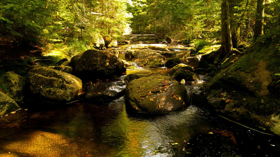Being zen, far in the woods.... little river in Lake Superieur, Qc, Canada Hiking Lake Superieur Love Nature Relaxing Beauty Beauty In Nature Canada Deep Woods Fall Forest River Sounds Of Nature Woods Zen Lost In The Landscape