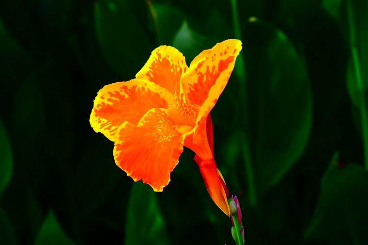 Flowers Orange Flower Nature Photography Nature Color Photography North Carolina Yellow Flower