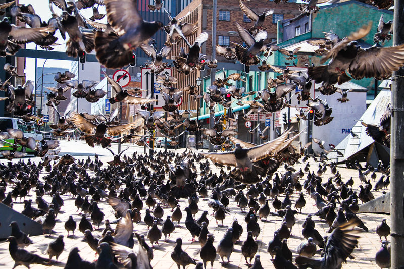 Pigeon Square in downtown Johannesburg High Angle View Togetherness Street City Flock Of Birds Wings Birds Bird Flying Pigeon Inner City Urban Johannesburg South Africa Crowd Abundance Unity Day