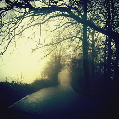 A Gorgeous Misty Place to get Lost in Surrey United Kingdom