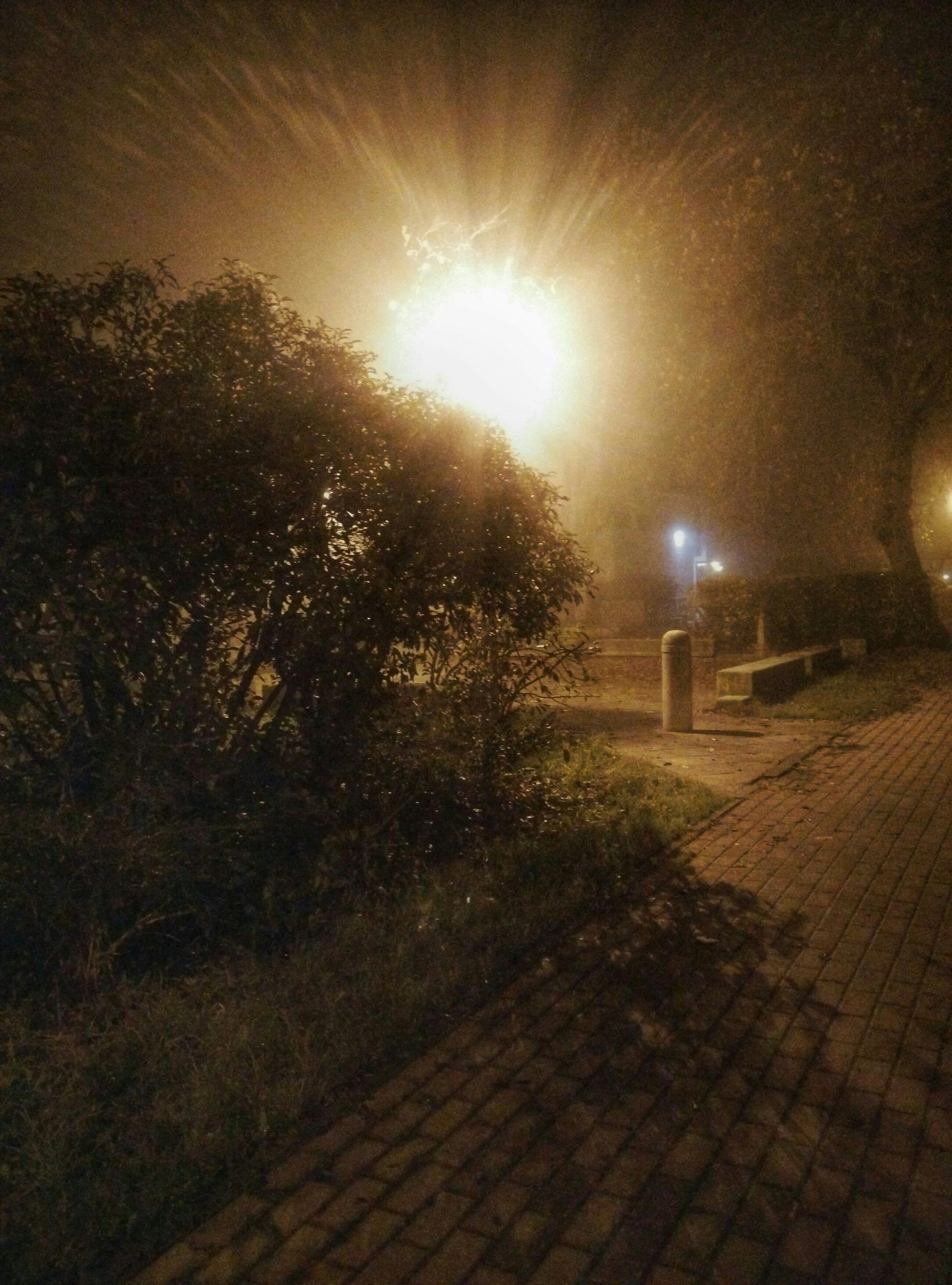 night, tree, illuminated, street light, the way forward, footpath, street, lighting equipment, grass, road, outdoors, growth, sunlight, nature, tranquility, no people, lens flare, empty, cobblestone, plant