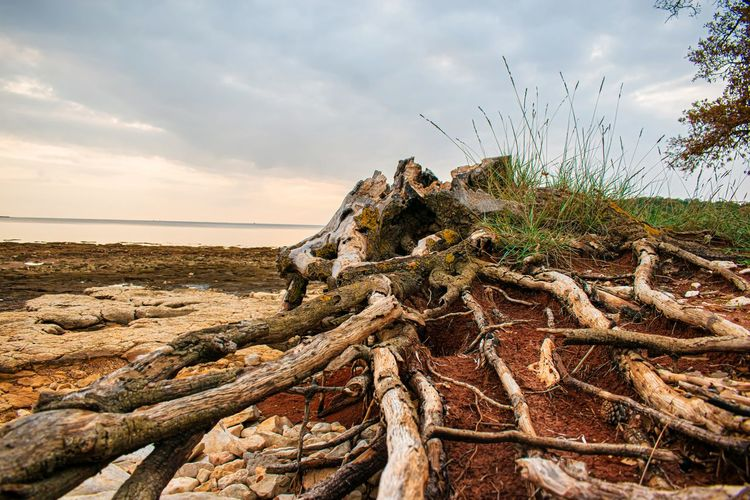 Driftwood on rock by sea against sky
