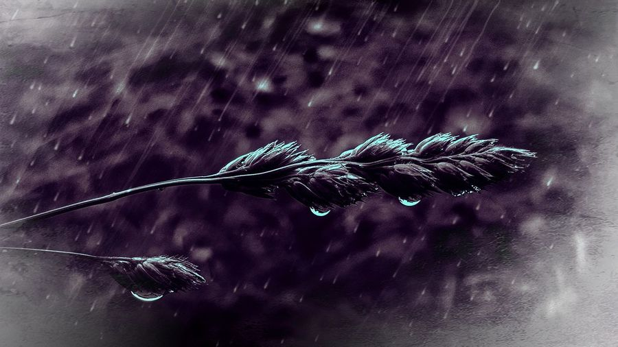 Everything happens for a reason.... Smartphonephotography Drops Of Water Hanging Water Drop Droplet Purple Nature EyeEm Best Shots EyeEm Nature Lover Beauty In Nature EyeEm Best Edits Rain Dropart Star - Space Water Space Sky Close-up Rainfall RainDrop Blooming