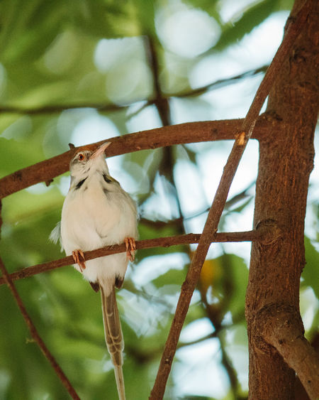 Animal Themes Animal Bird One Animal Vertebrate Tree Perching Animal Wildlife Animals In The Wild Branch Plant Focus On Foreground No People Low Angle View Day Nature Close-up Outdoors Zoology Beak
