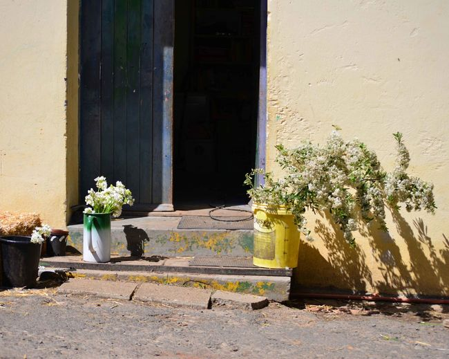 Low Ange View Of Potted Plants On Doorstep