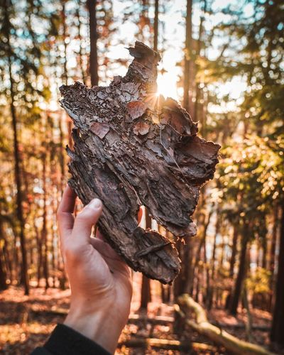 Cropped image of hand holding tree trunk in forest
