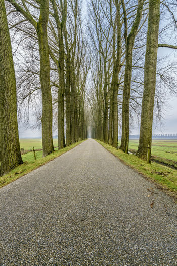 Endless road between an avenue of bare trees during the winter on a dike in dutch farmland. Beauty In Nature Conceptual Photography  Day Dike Endless Freedom Holland Horizon Landscape Lane Nature Netherlands Nature No People Outdoors Perspective Perspective Photography Road Roadtrip Scenics Season  Spooky Atmosphere Spooky Trees Tranquility Tree Winter