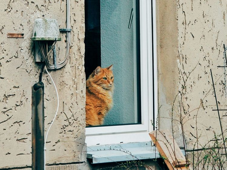 Cat Cats Cat Lovers Cats Of EyeEm Cat On The Window Cat On The Windowsill Cat Looking Out Of The Window Cat Looking At Window Sad Cat Rainy Days Rainy Day Rain EyeEm Best Shots Eye4photography  Urbanphotography Berlin Berliner Ansichten Orange Cat Waiting For Summer Waiting For Spring Indoor Cat
