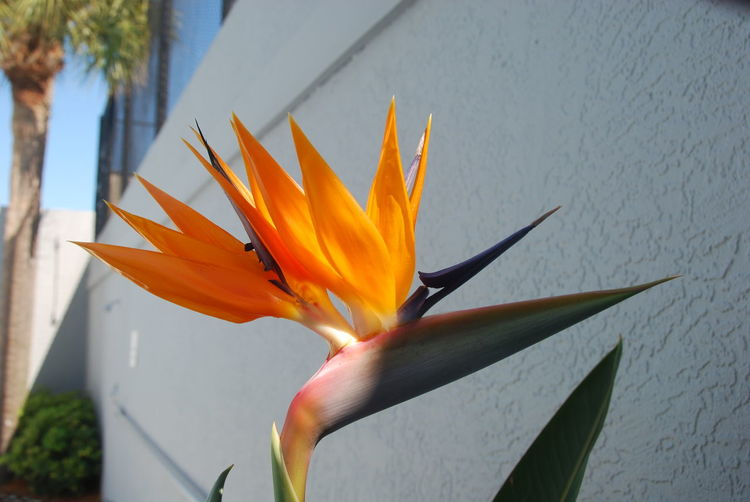 Beauty In Nature Bird Of Paradise - Plant Blooming Close-up Day Flower Flower Head Fragility Freshness Growth Nature No People Outdoors Petal Plant
