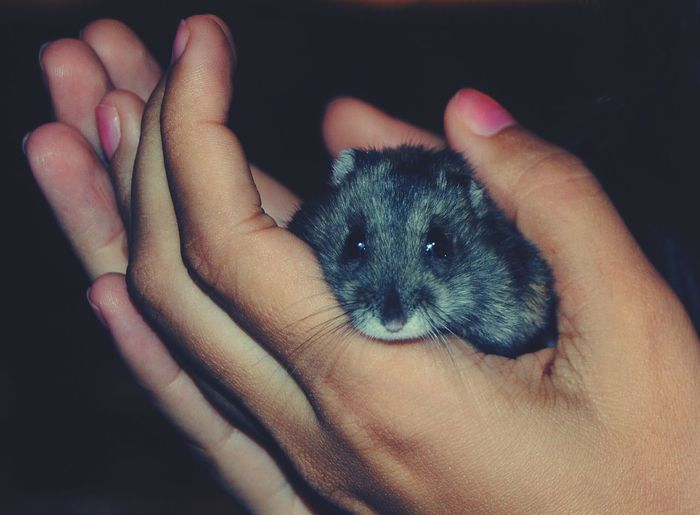 Littlethings Happy :) Animal Hamster Take Care Cute♡ Cute Pets So Cute :) Socute💕 Animal Photography Hands #NotYourCliche Love Letter