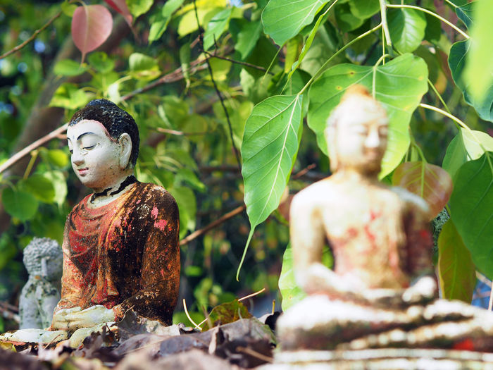 Close-up of lord buddha statue against tree