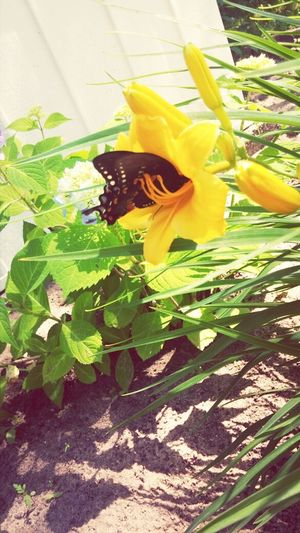Enjoying Life Taking Photos Butterfly ❤ Flower